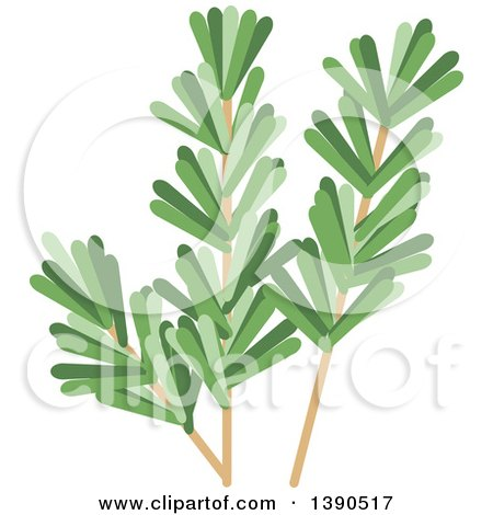 Clipart of a Culinary Spice Herb, Rosemary - Royalty Free Vector Illustration by Vector Tradition SM