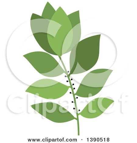 Clipart of a Culinary Spice Herb, Bay Leaf - Royalty Free Vector Illustration by Vector Tradition SM