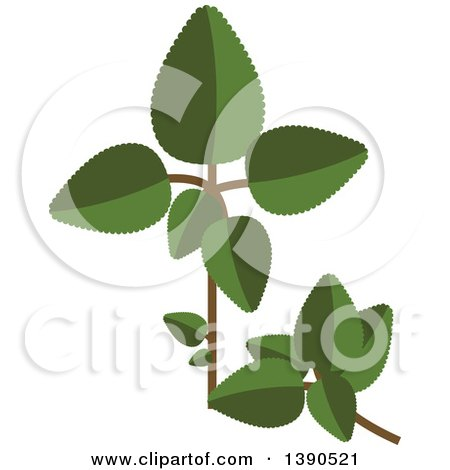 Clipart of a Culinary Spice Herb, Oregano - Royalty Free Vector Illustration by Vector Tradition SM