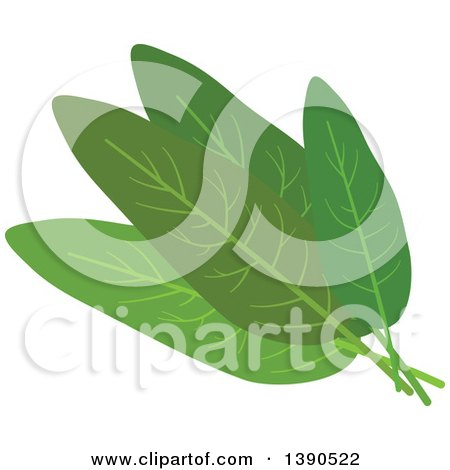 Clipart of a Culinary Spice Herb, Sage - Royalty Free Vector Illustration by Vector Tradition SM