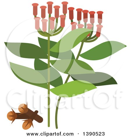 Clipart of a Culinary Spice Herb, Cloves - Royalty Free Vector Illustration by Vector Tradition SM