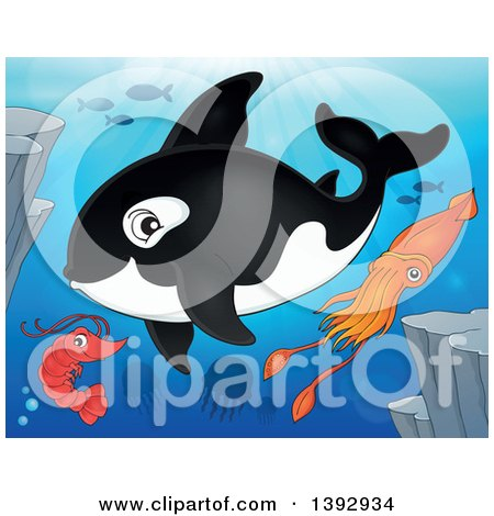 Clipart of a Killer Whale Orca, Shrimp, Fish and Squid - Royalty Free Vector Illustration by visekart