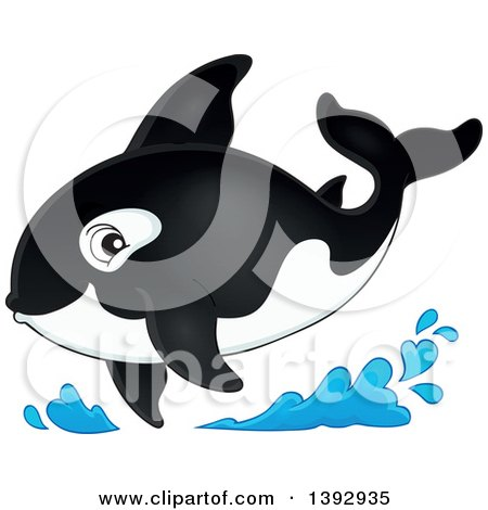 Clipart of a Killer Whale Orca - Royalty Free Vector Illustration by visekart