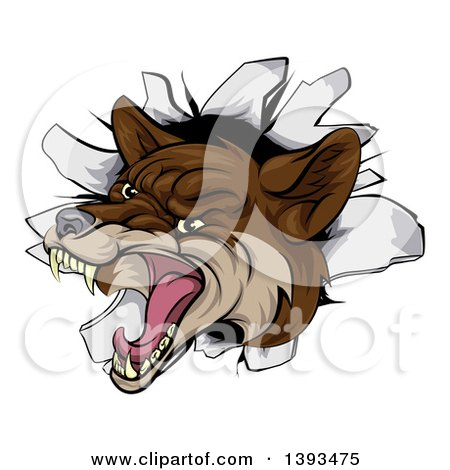 Clipart of a Vicious Coyote Mascot Head Breaking Through a Wall - Royalty Free Vector Illustration by AtStockIllustration