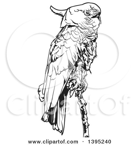 Clipart of a Black and White Perched Cockatoo Bird - Royalty Free Vector Illustration by dero