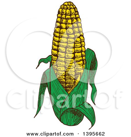 Clipart of a Sketched Ear of Corn - Royalty Free Vector Illustration by Vector Tradition SM