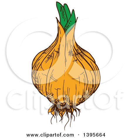 Royalty-Free (RF) Clipart of Onions, Illustrations, Vector Graphics #1