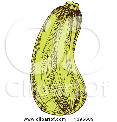Clipart of a Sketched Zucchini - Royalty Free Vector Illustration by Vector Tradition SM