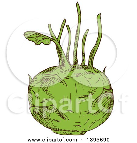 Clipart of a Sketched Kohlrabi - Royalty Free Vector Illustration by Vector Tradition SM
