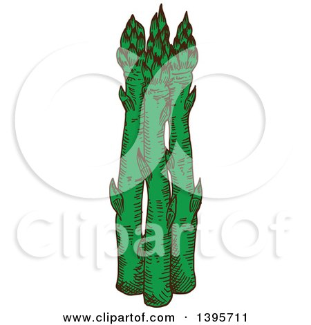Clipart of Sketched Asparagus - Royalty Free Vector Illustration by Vector Tradition SM