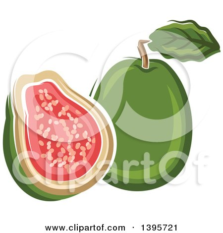 Clipart of a Sketched Apple Guava - Royalty Free Vector Illustration by Vector Tradition SM