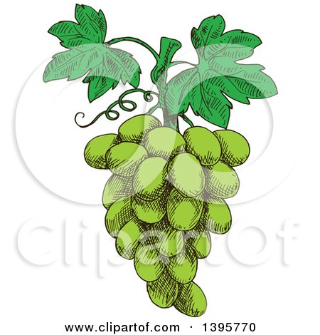 Clipart of a Sketched Bunch of Green Grapes - Royalty Free Vector Illustration by Vector Tradition SM