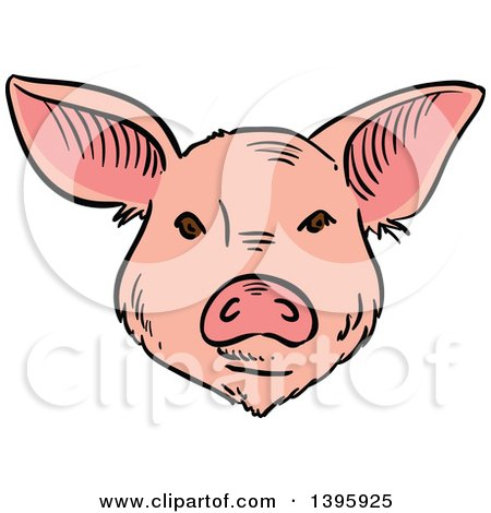 Clipart of a Sketched Pig Face - Royalty Free Vector Illustration by Vector Tradition SM
