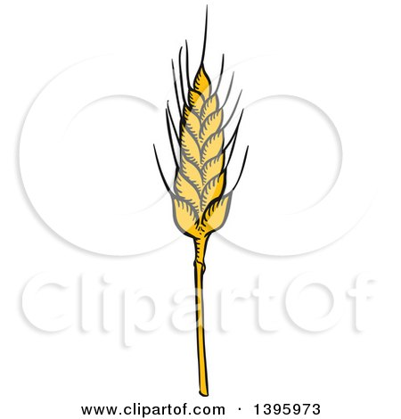 Clipart of a Sketched Wheat Stalk - Royalty Free Vector Illustration by Vector Tradition SM
