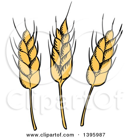 Clipart of Sketched Wheat Stalks - Royalty Free Vector Illustration by Vector Tradition SM