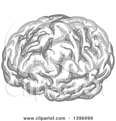 Clipart of a Sketched Gray Brain - Royalty Free Vector Illustration by Vector Tradition SM