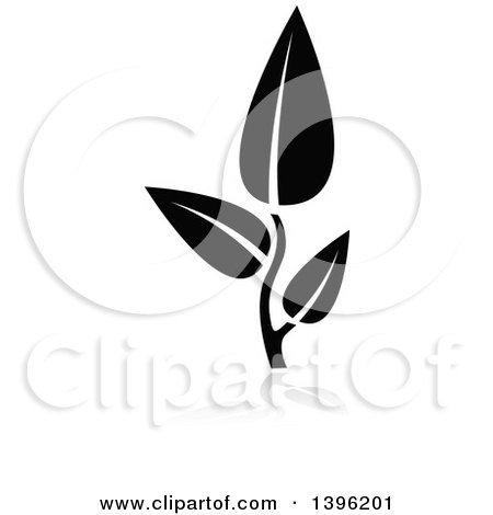 Clipart of a Black Leafy Seedling Plant with a Gray Reflection - Royalty Free Vector Illustration by dero