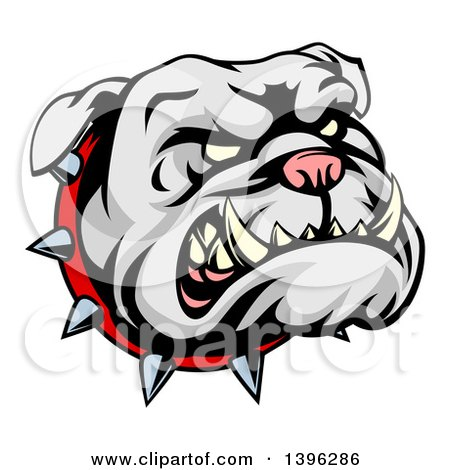 Clipart of a Snarling Gray Bulldog Mascot Face with a Spiked Collar - Royalty Free Vector Illustration by AtStockIllustration