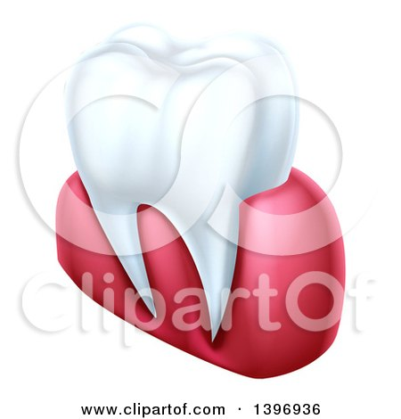 Clipart of a 3d Human Tooth and Gums - Royalty Free Vector Illustration by AtStockIllustration