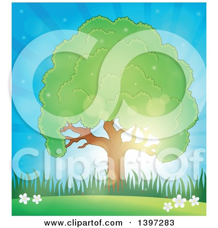 Clipart of a Lush Tree with a Green Canopy Against a Sunny Sky - Royalty Free Vector Illustration by visekart