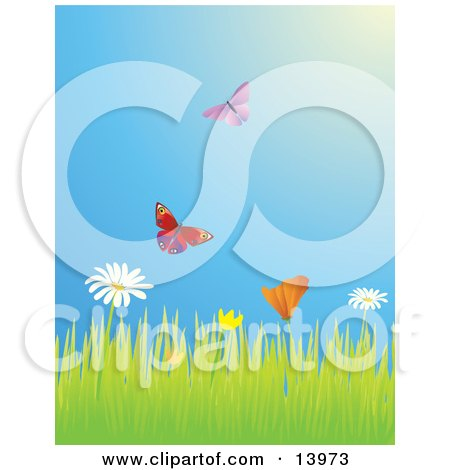 Two Butterflies Flying Over A Meadow Of Daisy And Poppy Wildflowers Posters, Art Prints