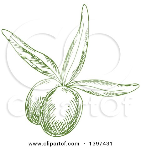 Clipart of Green Sketched Olives - Royalty Free Vector Illustration by Vector Tradition SM
