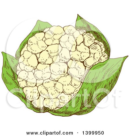 Clipart of a Sketched Cauliflower - Royalty Free Vector Illustration by Vector Tradition SM