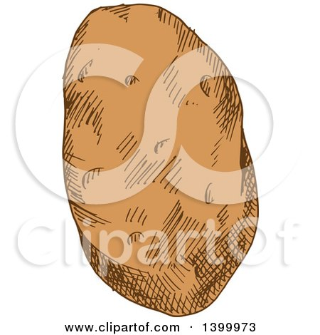 Clipart of a Sketched Potato - Royalty Free Vector Illustration by Vector Tradition SM
