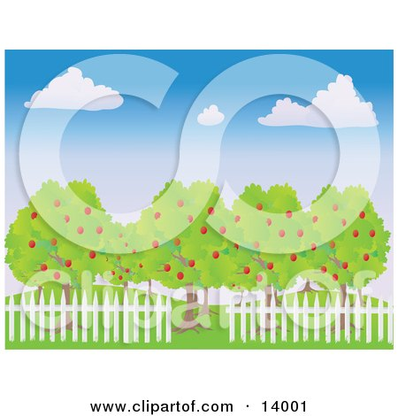 White Picket Fence Around Lush Apple Trees In An Orchard Under A Blue Sky With White Puffy Clouds Clipart Illustration by Rasmussen Images