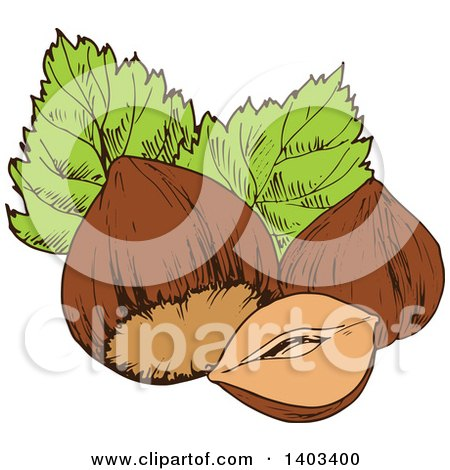 Clipart of Sketched Hazelnuts - Royalty Free Vector Illustration by Vector Tradition SM