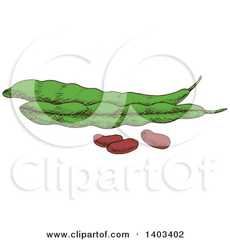 Clipart of Sketched Beans and Pods - Royalty Free Vector Illustration by Vector Tradition SM