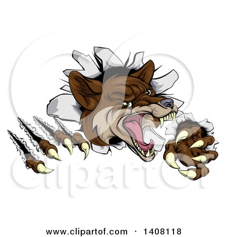 Clipart of a Vicious Coyote Mascot Slashing Through a Wall - Royalty Free Vector Illustration by AtStockIllustration
