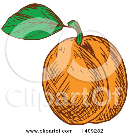 Clipart of a Sketched Apricot - Royalty Free Vector Illustration by Vector Tradition SM