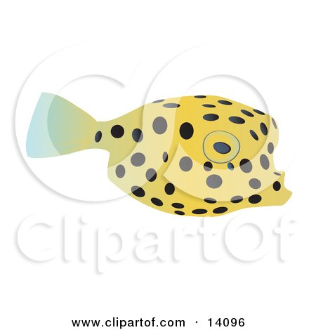 Cute Yellow Pufferfish With Black Spots Wildlife Clipart Illustration by Rasmussen Images