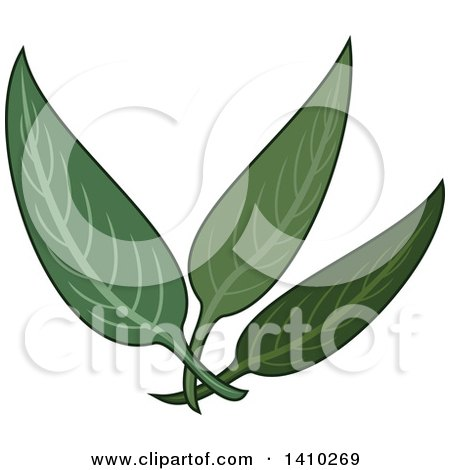 Clipart of a Culinary Herb Spice - Sage - Royalty Free Vector Illustration by Vector Tradition SM