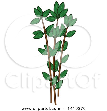 Clipart of a Culinary Herb Spice - Thyme - Royalty Free Vector Illustration by Vector Tradition SM