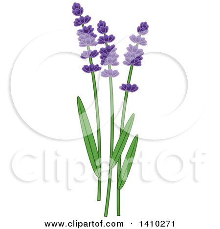 Clipart of a Culinary Herb Spice - Lavender - Royalty Free Vector Illustration by Vector Tradition SM