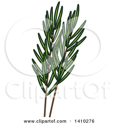 Clipart of a Culinary Herb Spice - Rosemary - Royalty Free Vector Illustration by Vector Tradition SM