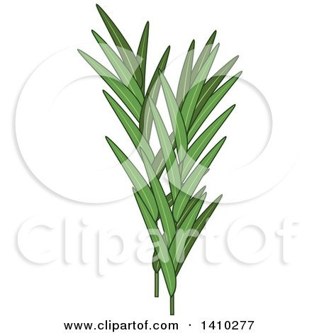 Clipart of a Culinary Herb Spice - Tarragon - Royalty Free Vector Illustration by Vector Tradition SM