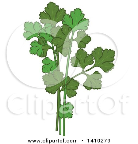 Clipart of a Culinary Herb Spice - Parsley - Royalty Free Vector Illustration by Vector Tradition SM