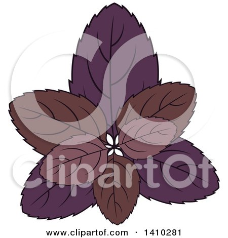Clipart of a Culinary Herb Spice - Basil - Royalty Free Vector Illustration by Vector Tradition SM