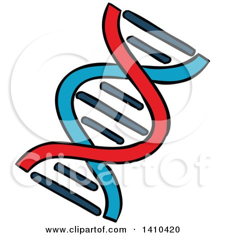 Clipart of a Sketched Dna Strand - Royalty Free Vector Illustration by Vector Tradition SM