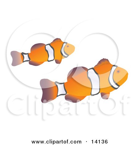 Pair of Orange and White Clownfish Swimming Sea Life Clipart Illustration by Rasmussen Images