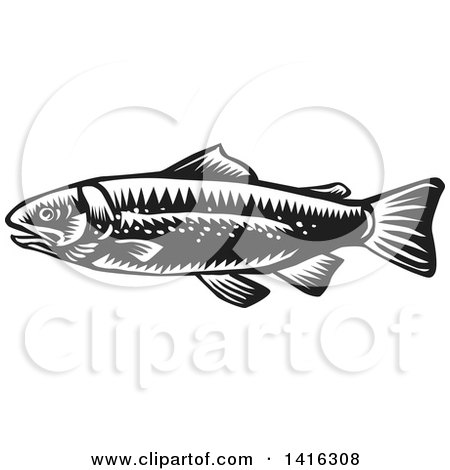 Clipart of a Retro Black and White Woodcut Spotted Trout Fish - Royalty Free Vector Illustration by patrimonio