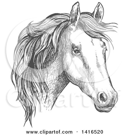 Clipart of a Gray Sketched Horse Head - Royalty Free Vector Illustration by Vector Tradition SM