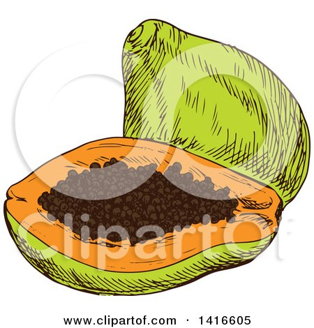 Clipart of a Sketched Papaya - Royalty Free Vector Illustration by Vector Tradition SM