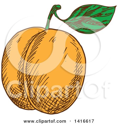 Clipart of a Sketched Apricot Peach or Nectarine - Royalty Free Vector Illustration by Vector Tradition SM