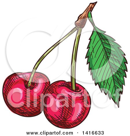 Clipart of Sketched Cherries - Royalty Free Vector Illustration by Vector Tradition SM