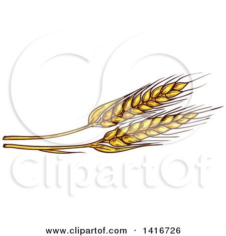 Clipart of Sketched Wheat - Royalty Free Vector Illustration by Vector Tradition SM