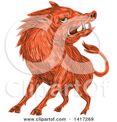 Clipart of a Sketched Angry Razorback Boar - Royalty Free Vector Illustration by patrimonio